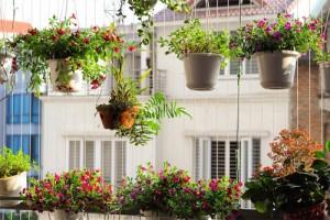 Chung cư Hà Nội đẹp nhờ ban công hoa
