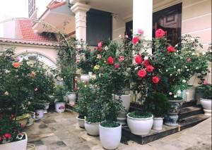 Thiết kế biệt thự phủ kín hoa hồng